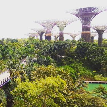 Gardens by the Bay, the view from Marina Bay Sands