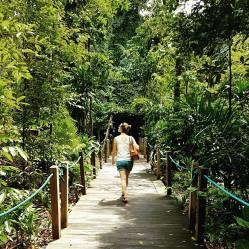 Wandering through Botanic Gardens