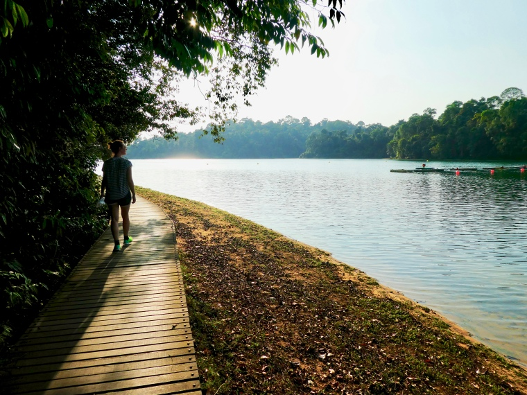 MacRitchie_Reservoir