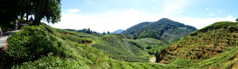 Cameron highlands vista