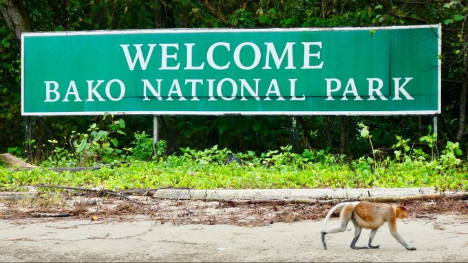 Proboscis monkey at Bako National Park